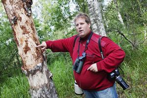 Ulrik Lötberg ser till att hackspettarna får ordentligt med mat, i förhoppningen att de ska tycka att Färnebofjärden är ett trevligt ställe och stanna kvar.