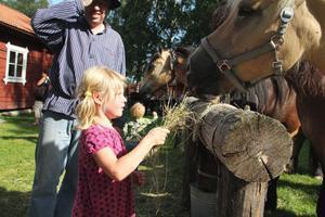 Freja Fritz, 5 år från Alfta, passade på att mata hästarna.– Jag tycker om att klappa dem, de är snälla, sade hon.