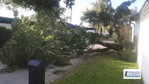Ett träd har vält på Bandygatan.