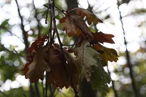 Höstens alla fina färger.