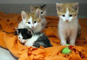 Kattungar får mångas hjärtan att smälta.
