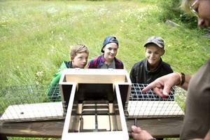 Carl Köhler, Fredrik Andersson och Neo Pålsson tittar intresserat på när Lena Laaksonen visar minkfällan.