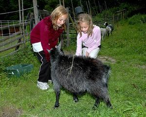 Get. Fanny Ahlbom och Amanda Norling bekantar sig med en av getterna i Säterdalen.