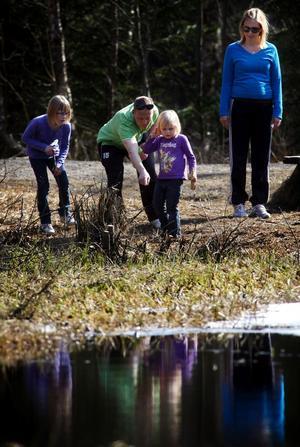 Tommy och Madelene Lundgren med döttrarna Emilia och Linnea brukar besöka tjärnen när grodorna har sin parningstid.
