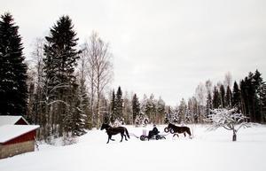 Hans Brunlöf kör helst hästarna i skogen. Skogsbilvägarna på berget i Henninge är perfekt. Milslånga slingor som framför allt är mjuka och fina på vintern.- I år är det perfekt, men de två senaste åren har varit skit.