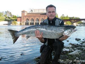 ÅRETS FÖRSTA. Ossi Petrelius, Gävle var den som tog årets första nystigna lax i Älvkarleby. vikten var på 11,8 kilo. Fångstdatum 2 juniFoto: Tony Berggren