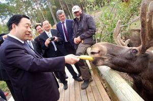Mr Liu Zhenya verkade gilla älgar och fick chans att mata en på älgfarmen i Överberg.