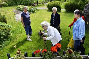 """Pratglad. Asta tar emot """"gänget"""" i sin vackra trädgård, och hon berättar gärna om sitt hem och omgivningen."""