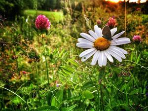 Juli: Sommarkväll ur insektsperspektiv. Blomdoft och skogsutsikt.
