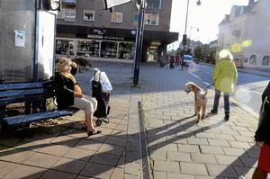 Fler än en person kollade till extra på det stora följet av hundar.