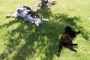 Hunden och katten tar sig en vilopaus i skuggan av ett litet träd.