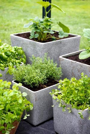 Ljusa krukor och plantor som doftar och smakar.
