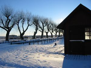 Vinterbild från gästhamnen vid Mälarkrogen