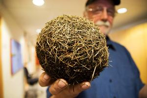 Bengt Höglin har hittat märkliga tallbarrsbollar vid Stugusjön. Och de väcker en hel del frågor.
