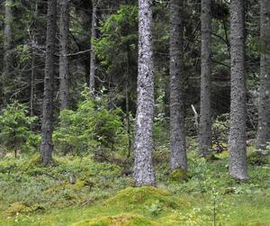 Skogen kan göra underverk för svenska utsläpp.