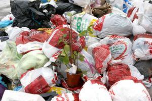 Dålig avfallshantering är ofta en bov i dramat gällande råttor. Enligt lag ska en bostad vara fri från skadedjur och fastighetsägaren ska förebygga, kontrollera och vid behov åtgärda eventuella skadedjursproblem.