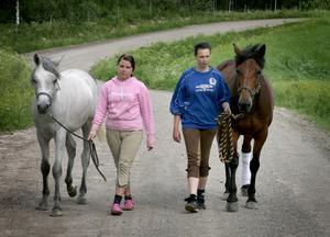Livsfarlig träning. Att träna hästar för att dem vana med biltrafik kan vara förenat med livsfara erfar Elina Bergsten och Emma Alexandersson efter onsdagens dramatiska möte med ett hotfullt äldre par.