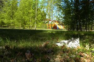 Alternativ plats. På planen upp mot backen där Folkets park en gång låg och efter Parkvägen finns det gott om plats för ett förskolebygge utan att behöva avverka skog. Gösta Kruus föreslår i ett medborgarförslag att beslutet om en ny förskola på Kyrkberget vid Hermanstorpsvägen ska omprövas.
