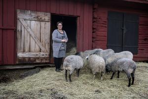 Gårdens får är inte vilka får som helst, de är av den gamla rasen Åsenfår och hör till en genbank.