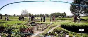 Wij Trädgårdar gick med förlust under 2008. Det dåliga resultatet beror bland annat på färre besökare än man räknat med.
