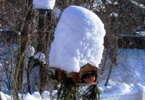 Gunnar Nilsson i Örnåsen skickade in en rolig iakttagelse av mängden snö vi har haft denna vinter. Bilden visar på ett humoristiskt sätt att det inte enbart var människor som drabbades av all snö denna rekordvinter.