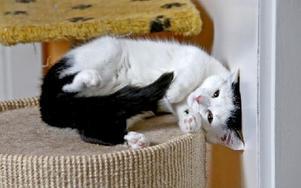 Det ligger katter lite varstans på katthemmet. Foto: Johnny Fredborg