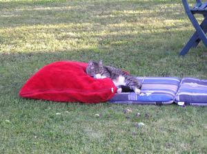 Vår katt Misan har nu tagit semester och vilar i skuggan av ett äppelträd på en dyna och kudde.