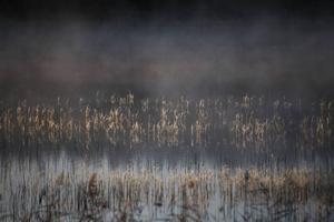 Vass i Lillsjön