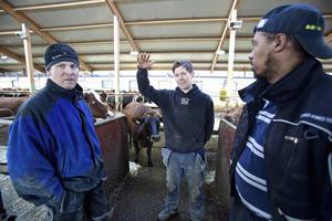 Det finns lyckliga bönder i Dalarna, Bröderna Bengtsson vann en miljon på att gå över till Gefleortens