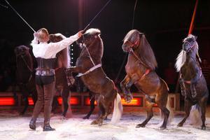 Yvonne Lubben i ett dressyrnummer med sex ponnier. Att få hästar att stå på bakbenen så här är inte så lätt som det ser ut. Det krävs mycket övertalning.