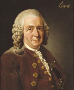 Carl von Linné, målning av Alexander Roslin, lade grunden till botaniken genom sina klassifikationer av växter och djur.