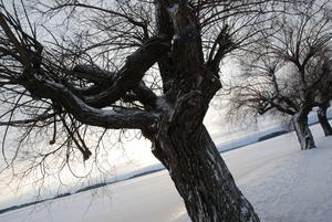 Pilarna i hamnen sover vintersömn. Fjärden är täckt av is och snö.