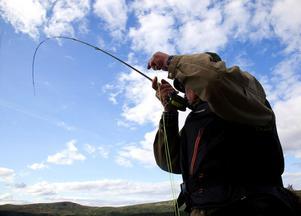 Hårda öringshugg och stillhet i en egen dalgång i norra Jämtland. Samen Joachim Andersson har för första gången öppnat Ohredahkes samebys vatten för ett litet antal sportfiskare. Flugfiskaren Krister Lövgren njuter av naturen och av fisket.