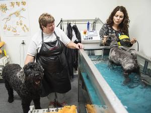 Lena Gréus med dvärgschnauzern Chaplin och den 58 kilo tunga ryska svart terriern Zeus får hjälp av Anki Pettersson.