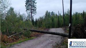 Läsarbild på träd som vält i blåsten, från Sätrabrunn. Se fler läsarbilder i BILDEXTRA.