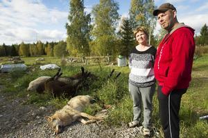 Det är andra gången på en vecka vargen attackerade fåren på gården hemma hos Eva Ljus-Strandberg och Christer Strandberg.