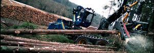 Säkerheten för skogsarbetarna hotas om skogsaktivisterna utlöser sina hot. Foto: Fredrik Persson/Arkiv