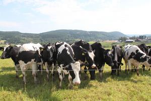 – Vår profilering är ladugårdarna, kossorna och naturen här, säger Mats Englund.