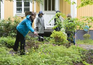 De infekterade snigelresterna sprids ut i trädgården av Cecilia Edström.