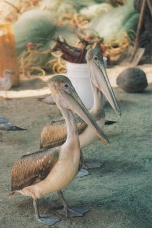 Dessa två gick raka vägen till strandens fiskaffär.