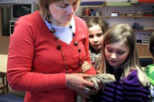 Ödlan Fishi är en riktig liten kelgris. Klassens lärare Camilla Degerfeldt håller henne medan Gila Lindblad och Isa Lundfeldt ska klappa.
