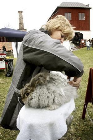 Kaninklippning. Gunilla Larsholt från Fjugesta visar hur man klipper angorakaniner för att få den bästa ullen.