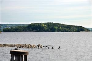 Tjuvholmen i inloppet till Sundsvalls hamn kan bli nakenbad.