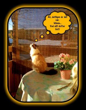 Detta är vår för mig. Min ena katt Buffy sitter ute på balkongen och njuter av solen för första gången i år...
