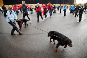 Det är inte helt lätt att värma upp när en av hundarna vill i väg åt ett annat håll.