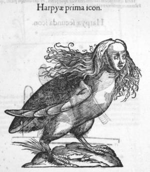 En harpyja ur Ulisse Aldrovandis