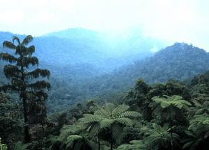 Gynnas av koldioxid. I själva verket är koldioxiden nödvändig för växternas fotosyntes och därmed våra liv, skriver Tage Andersson. Foto: Scanpix