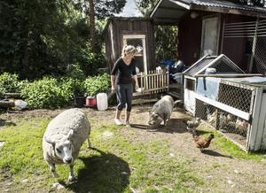 På gården samsas djur av alla de slag.