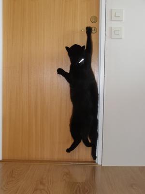 Våran katt Lakrits är en hejare på och öppna dörrarHär gäller det att låsa