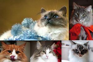 Ett montage med några av de senaste årens vinnare av Årets Lussekatt. Bilder på de 12 senaste vinnarna, tillsammans med mer information och länkar till artiklarna om vinnarna finns längre ner i denna artikel.Foto: Arkiv